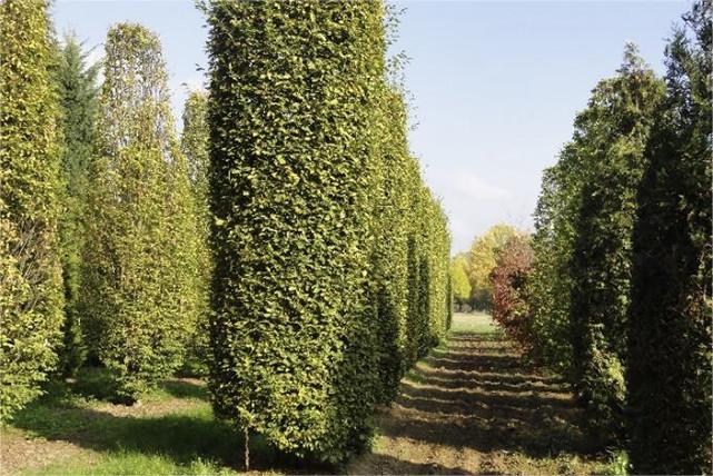 Durch eine Bad Homburger Baumschule genutzte Fläche
