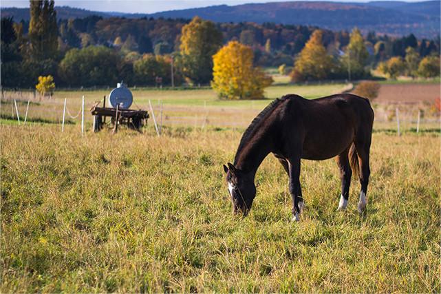 Wiesen für Pferdehalter