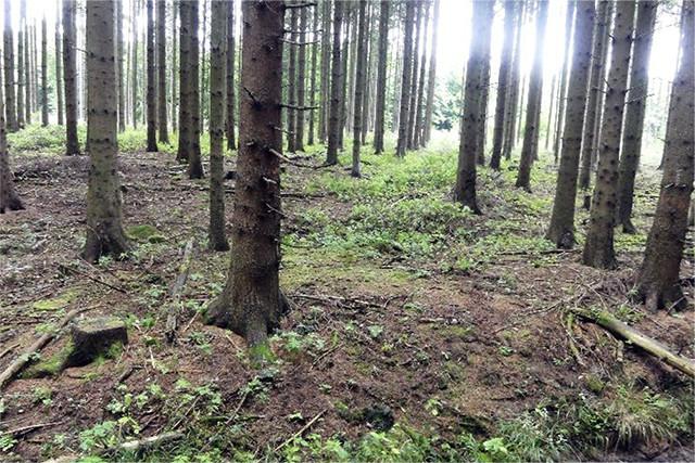 Waldfläche mit nachhaltigem Forstpflanzenanbau